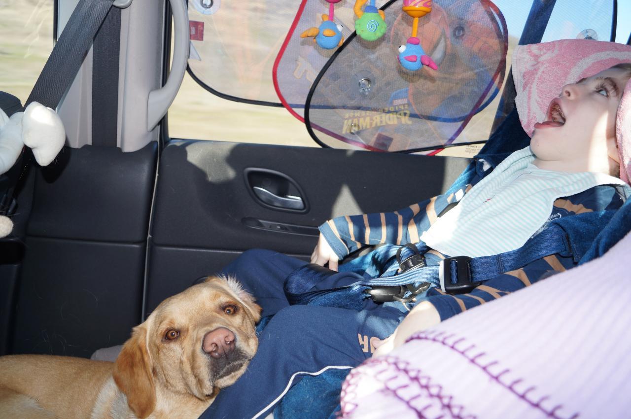 En voiture, mon chien me surveille!